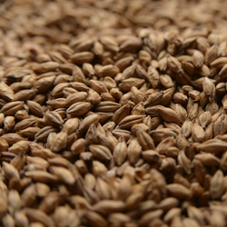 Malting Co. of Ireland Lager Malt - 55 LB (25 KG)
