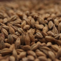 Thomas Fawcett & Sons Golden Promise Malt - 55 LB (25 KG)