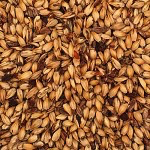 Thomas Fawcett & Sons Crystal Malt I (45L) - 55 LB (25 KG)