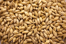 Gambrinus Pale Malt - 10 LB
