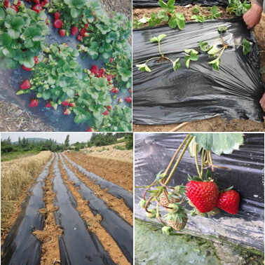 Black agricultural film strawberry PE film garden flower greenhouse plastic garden mulch film 0.014 mm thickness