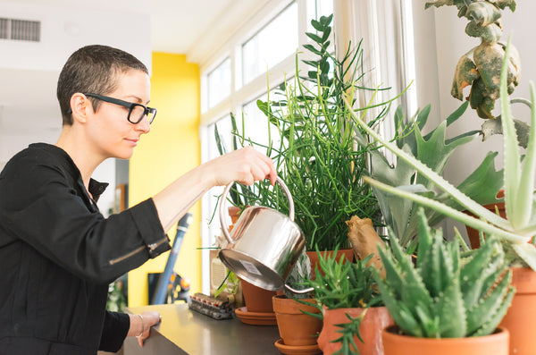 Watering houseplants: finding the space between parched and drowning