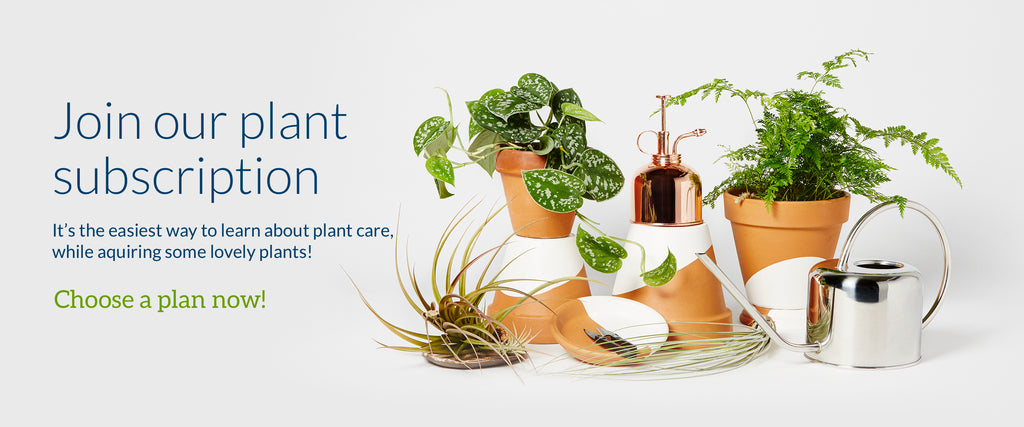 plant subscription