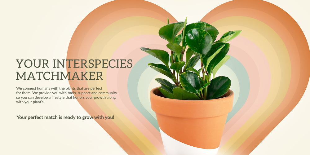Your interspecies matchmaker - We connect humans with the plants that are perfect for them. We provide you with tools, support and community so you can develop a lifestyle that honors your growth along with your plant's. Your perfect match is ready to gro