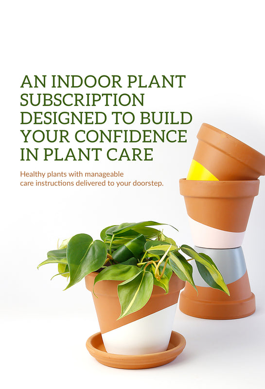 Join Our Subscription To Get Potted Indoor Plants Delivered