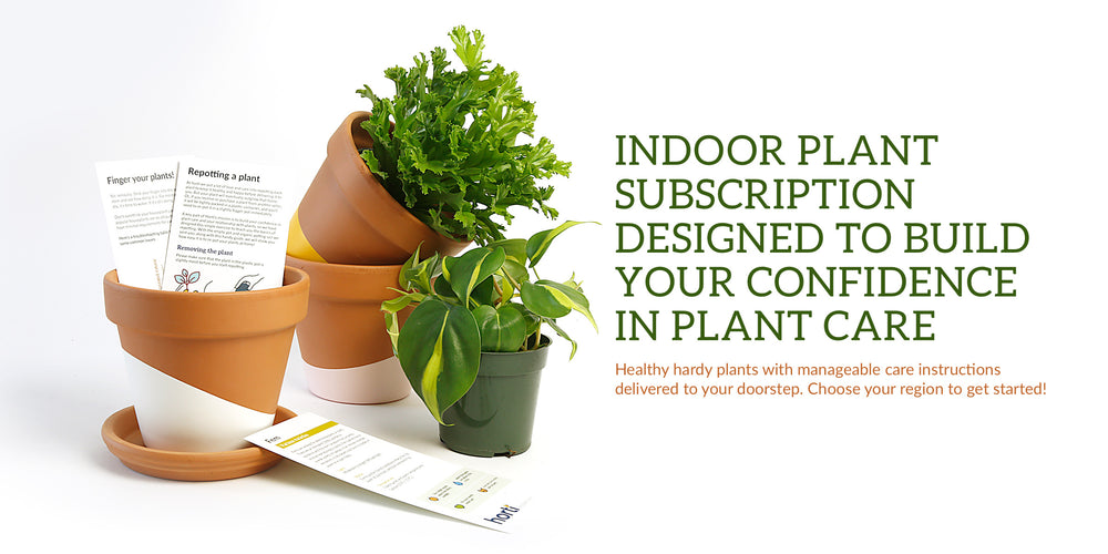 Indoor plant subscription designed to build your confidence in plant care. Healthy hardy plants with manageable care instructions delivered to your doorstep. Choose your region to get started!