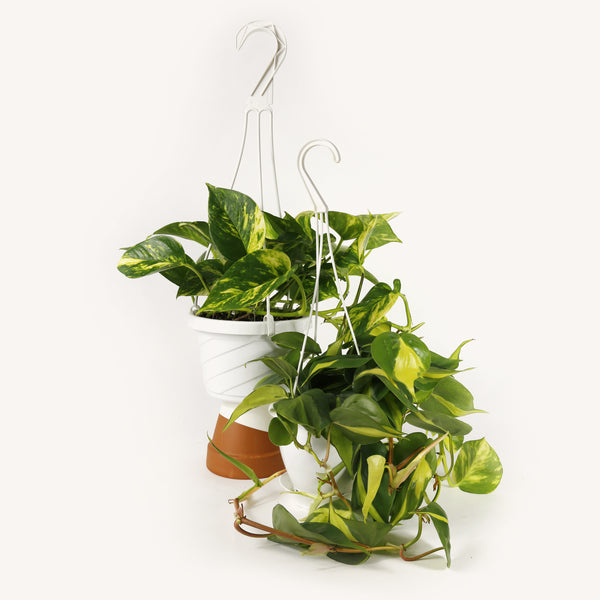 Hanging plant baskets