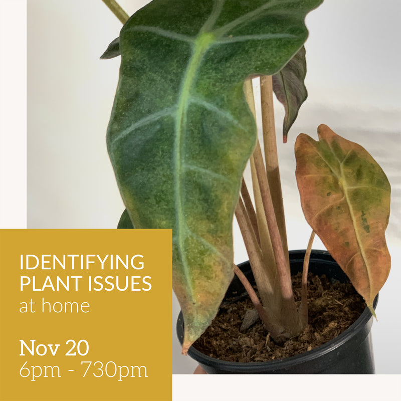 Identifying plant issues at home
