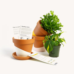 Monthly plant subscription box for NYC area.