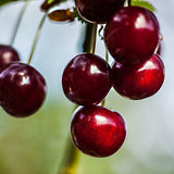 Cherry Balsamic