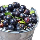 Black Currant Balsamic