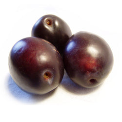 Italian Plum White Balsamic
