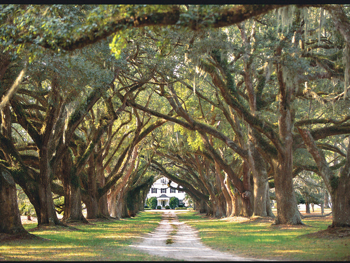 Backroads Guide To Carolina Low Country from Southern Living Magazine