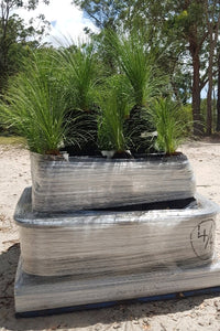 30-40cm Grass Trees - Full Pallet