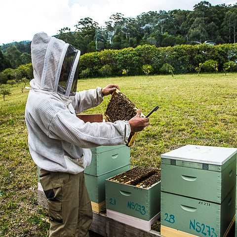 Local Producer Sven From Amber Drop Honey at Your Food Collective