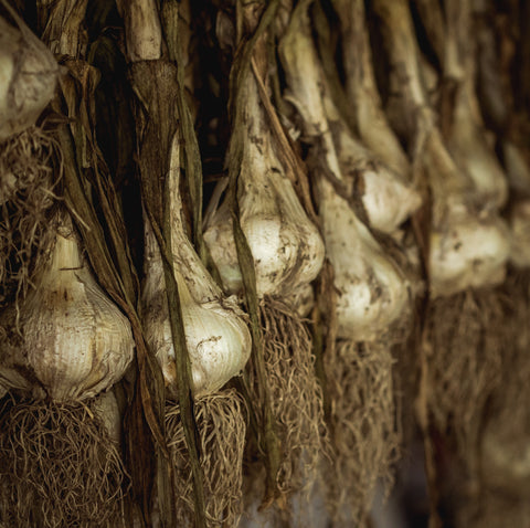 Garlic at Your Food Collective