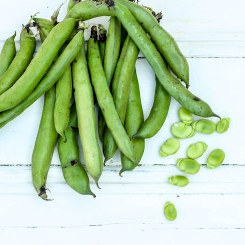 Broad beans at Your Food Collective
