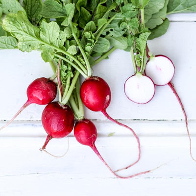 Local Radish from Fiatarone Farms at Your Food Collective
