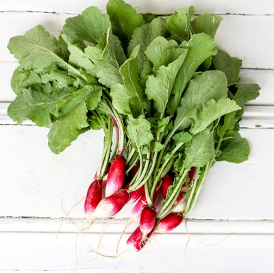 Local French Breakfast Radish from Half Acre Farm at Your Food Collectibe