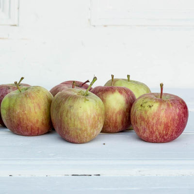 Local Fuji Apples from Hillside Harvest at your Food Collective