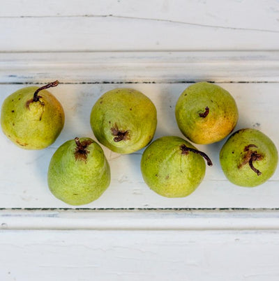 Local Pear (Packham) - 6