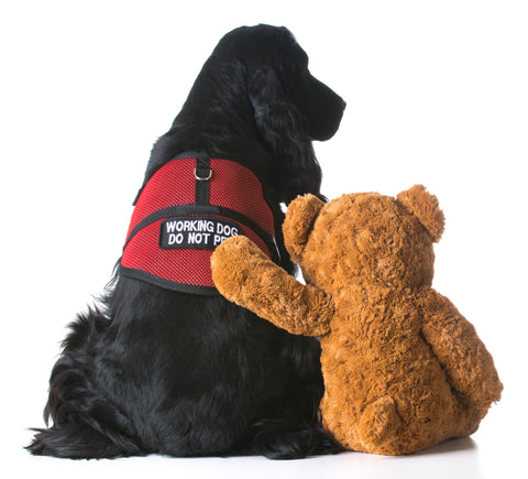 Service Dogs in Ontario- The Nuts & Bolts – JWalker Dog