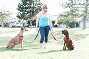 Multi Dog Leash