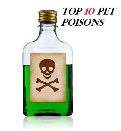 Pet Poison Prevention -Top 10 Poisons of 2016