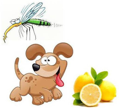 Recipes to make your own all natural, non-toxic, herbal flea, tick, mosquito Repellents