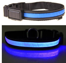 Solar USB Rechargeable LED Night Safety Glow Pet Collar
