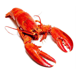 Cooked Boston Lobster (350-400G per piece)