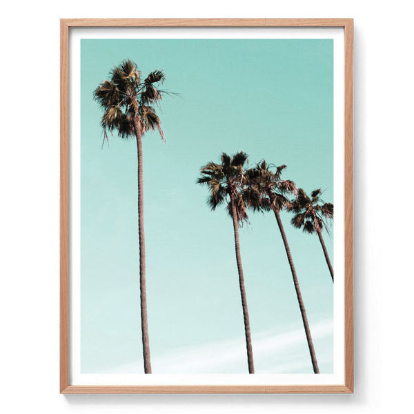 Aqua Palms Photography Print
