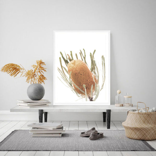 Banksia Photography Print