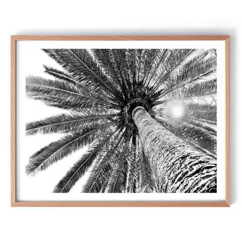 Beneath the Palms - Monochrome Print