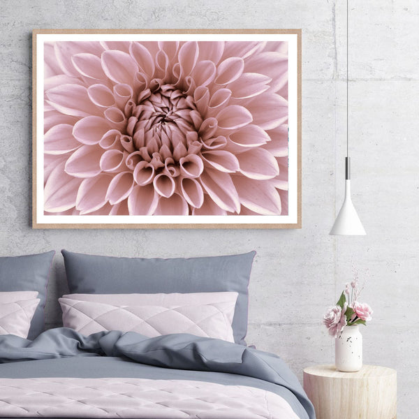 Dahlia in Bloom Print