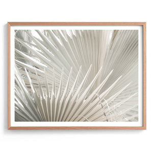 Nude Fan Palms Print