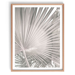 Dried Fan Palm Print