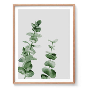 Eucalyptus Watercolour Print