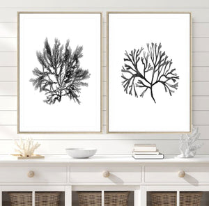 Monochrome Watercolour Seaweed & Coral Set of 2