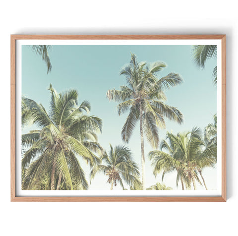 Palm Sky Wall Art Print