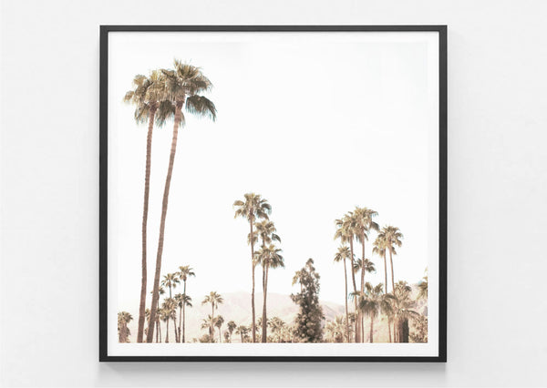 Palm Springs Valley Print