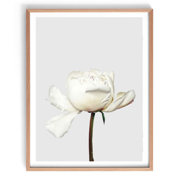 Peonia Photographic Print