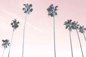 Pink Palms Photography Print