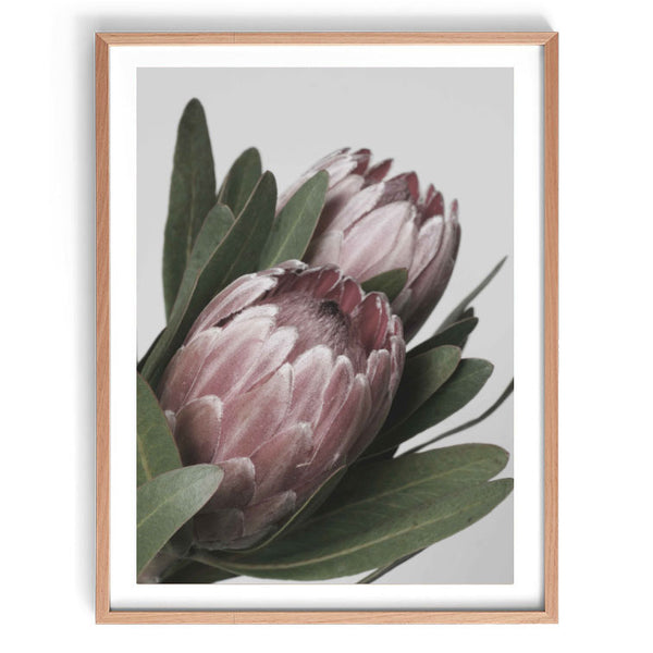 Protea in Bloom Print