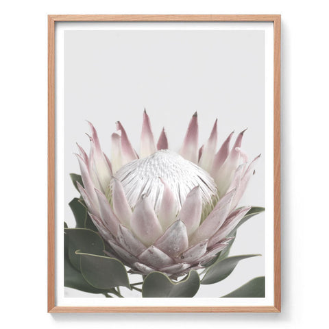 Protea in Bloom II Print