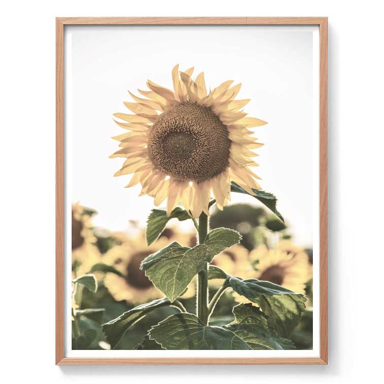 Sunflowers Wall Art Print