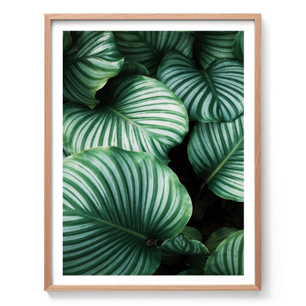 Variegated Leaf Photography Print