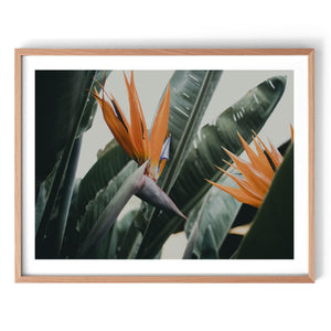 Bird of Paradise Leaf Print