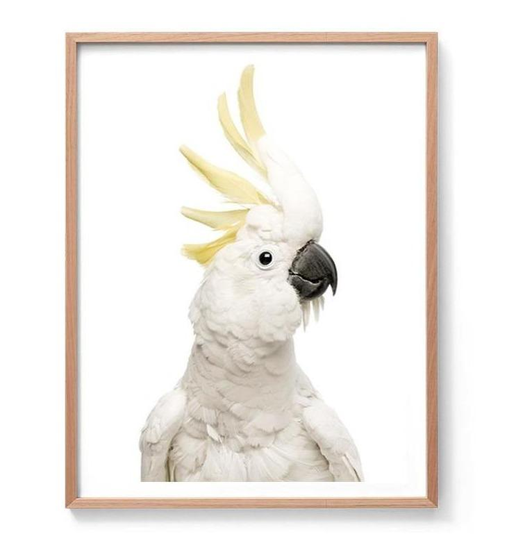 Cockatoo Photographic Print
