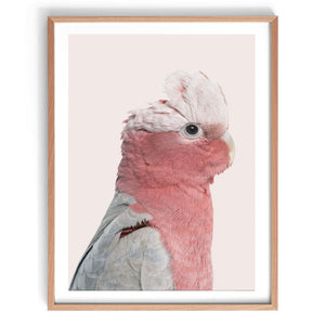 Rosie the Pink Cockatoo